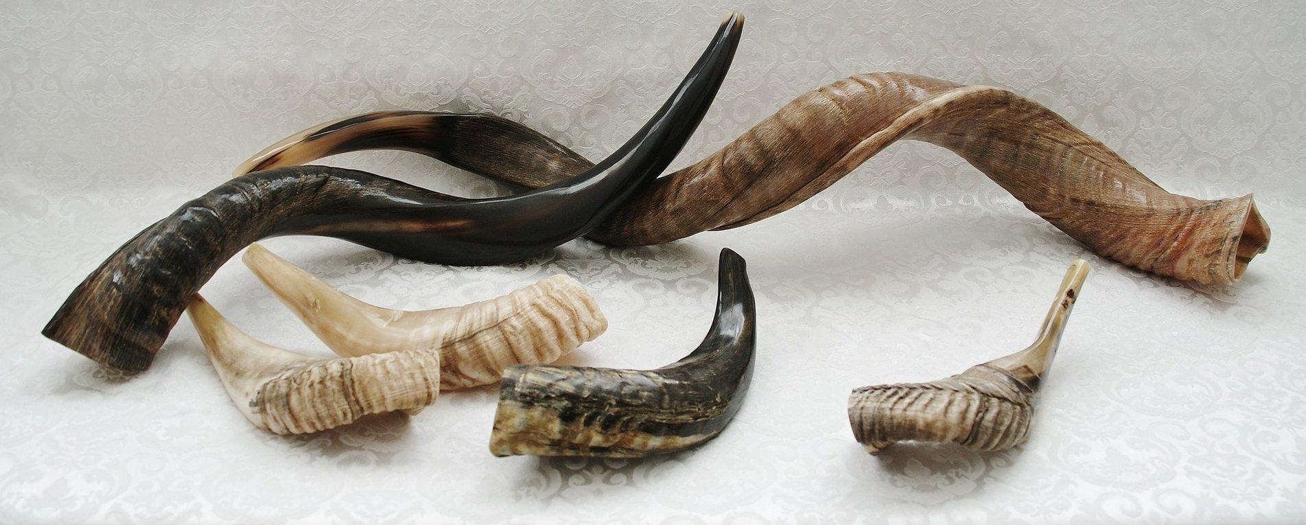 Shofars-(Ramshoorns)