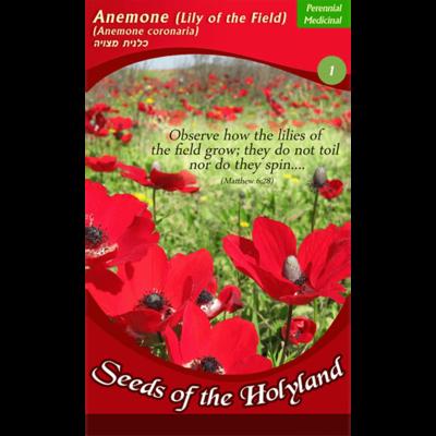 Bijbelse Bloemzaadjes uit Israel: Anemonen / Lely uit het Veld