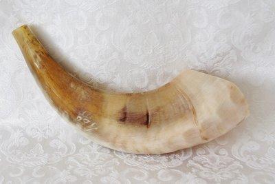Shofar (Kosher) voornamelijk licht gekleurd,gepolijst.