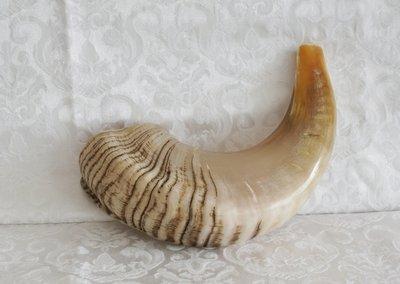 Shofar (Kosher) voornamelijk licht gekleurd.