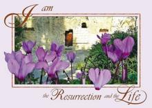 Bijbelse Wenskaart uit Israel met een prachtige foto uit de Graftuin in Jeruzalem en in het Engels: 'Ik ben de opstanding